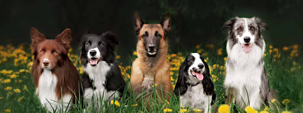 Dogs_Grass_Header