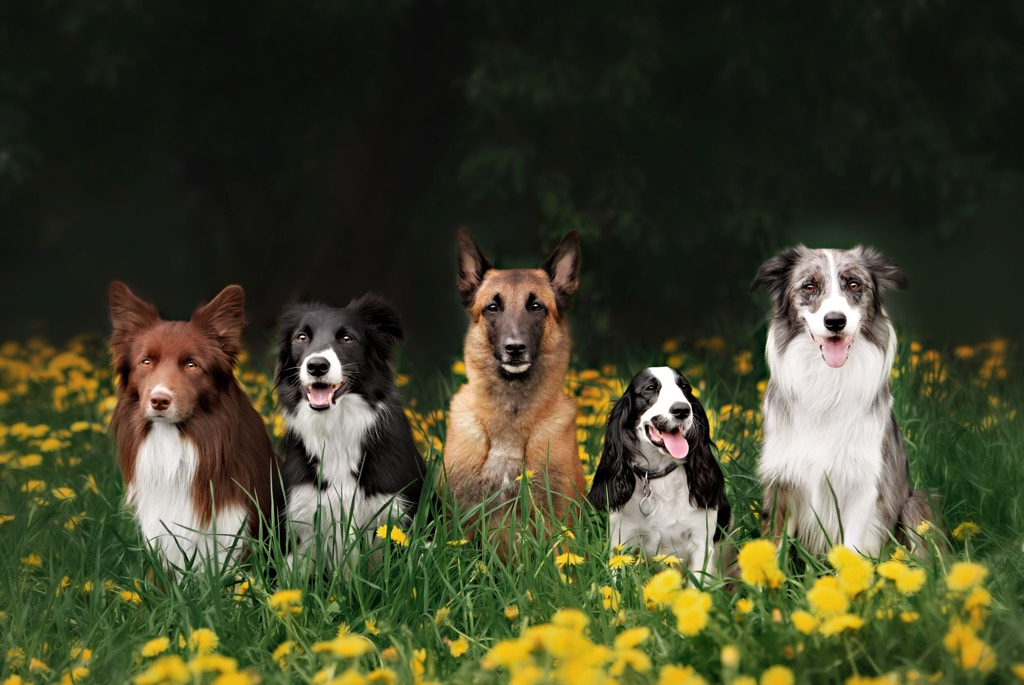 Dog_Group_2