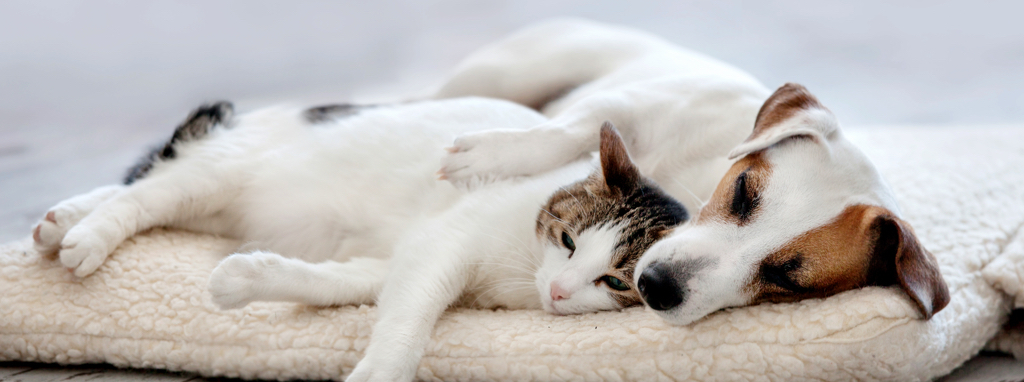 Dog_Cat_Sleeping_Header